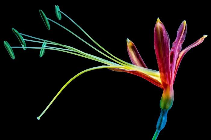 flower-302889_1920